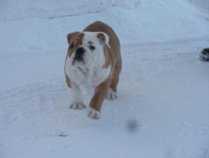 Leker i snön