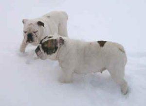 Igor och jag ute i snön och leker